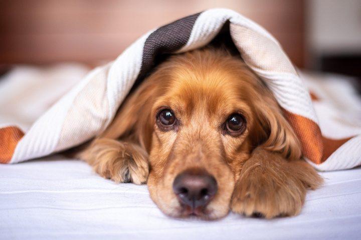 assurer chien sans identification